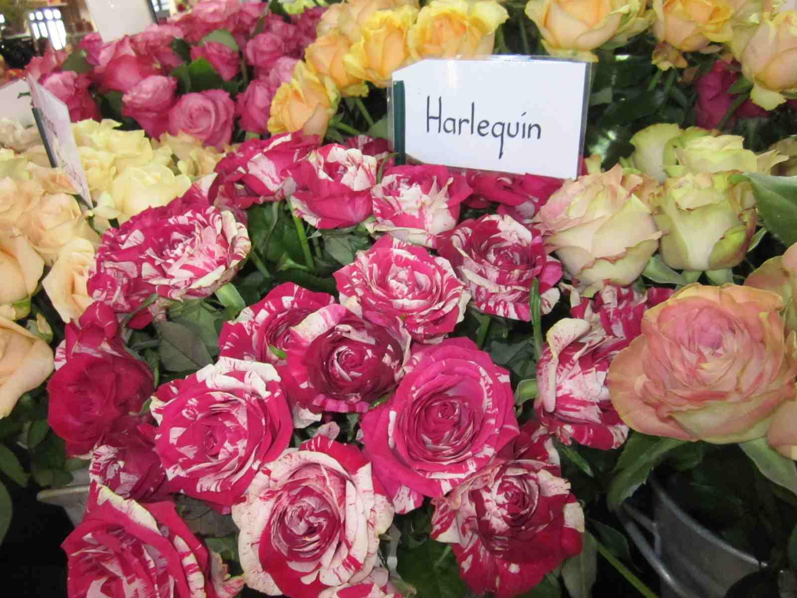Melbourne International Flower and Garden Show (7)