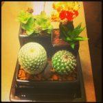 How to make a mini cactus display