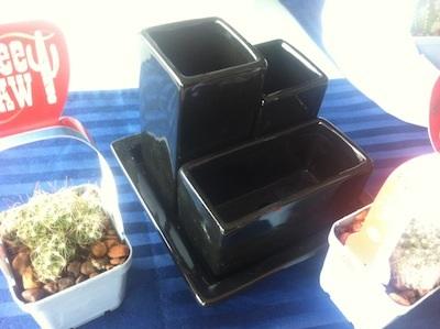 mini-cactus (2)