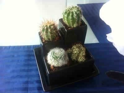 mini-cactus (6)