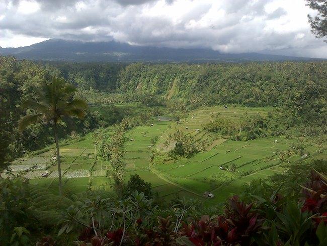 Mahagiri rice terrace view