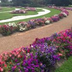 Rose Gardens at Werribee Mansion Melbourne