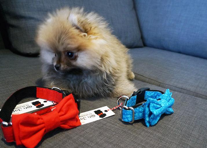 Emilia-Rossi-Blog-Pomeranian