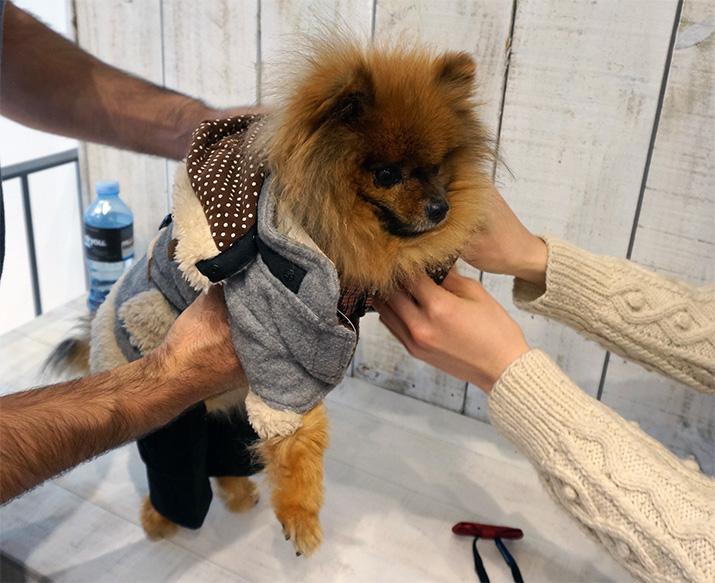 Goochie-Pomeranian-Emilia-Rossi-Blog-3
