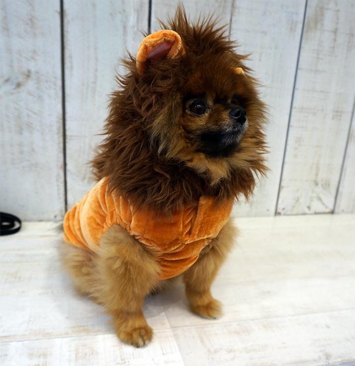 Goochie-Pomeranian-Emilia-Rossi-Blog-5