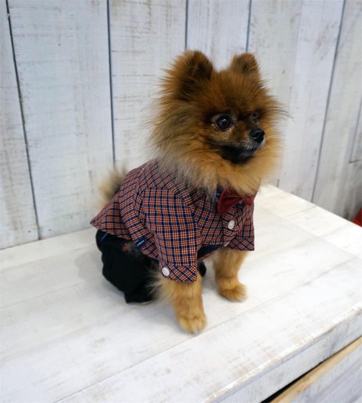 Goochie-Pomeranian-Emilia-Rossi-Blog